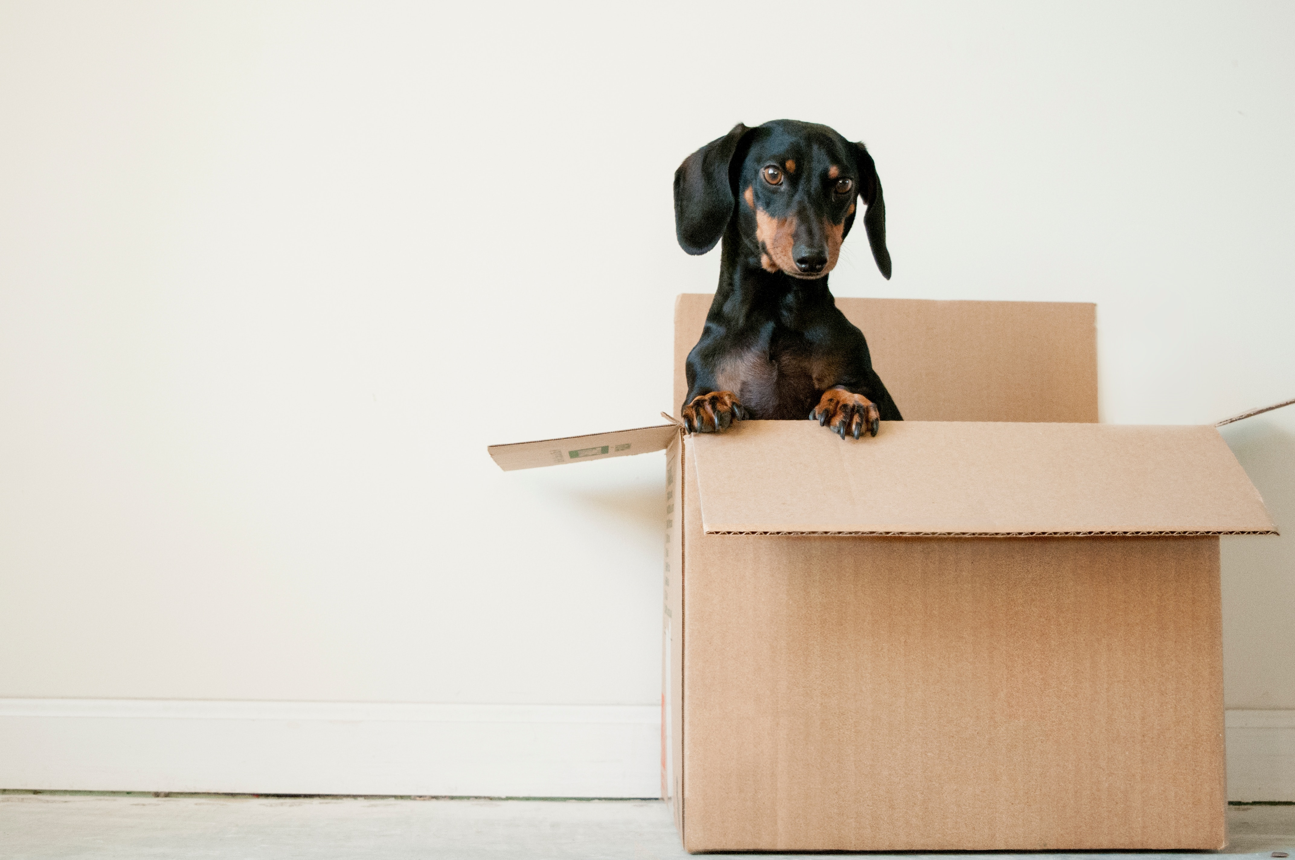 What is white box testing vs black box testing? (and when to involve a QA agency) - image of a puppy in a box